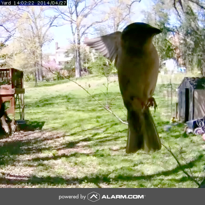 Alarm.com hummingbird